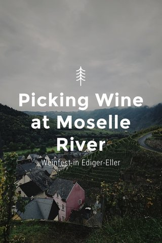 Picking Wine at Moselle River Weinfest in Ediger-Eller