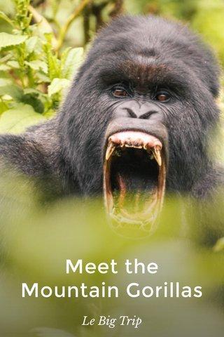Meet the Mountain Gorillas Le Big Trip