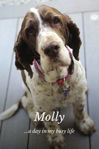 Molly ...a day in my busy life