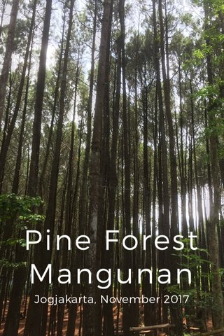 Pine Forest Mangunan Jogjakarta, November 2017
