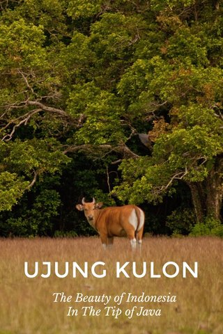 UJUNG KULON The Beauty of Indonesia In The Tip of Java
