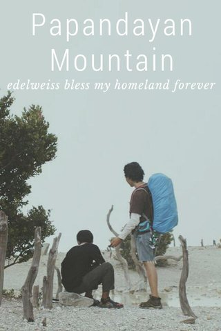 Papandayan Mountain edelweiss bless my homeland forever