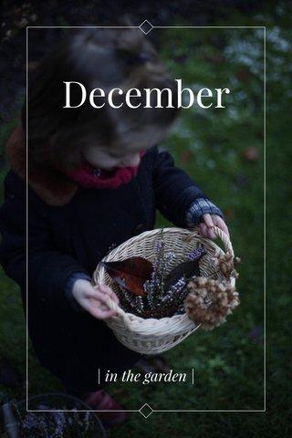December | in the garden |