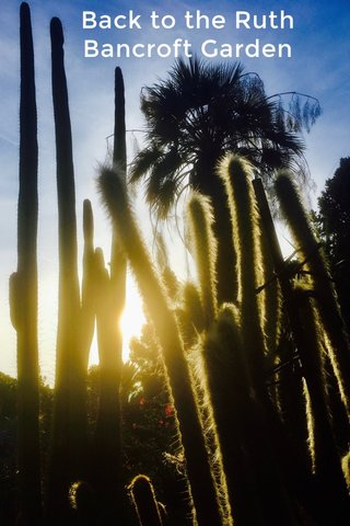 Back to the Ruth Bancroft Garden