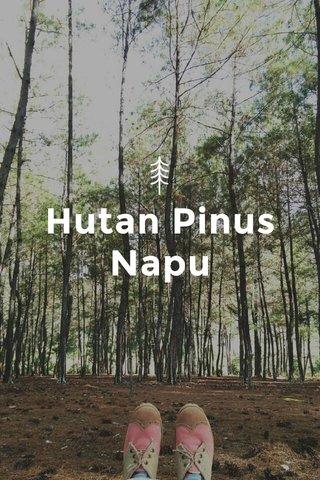 Hutan Pinus Napu