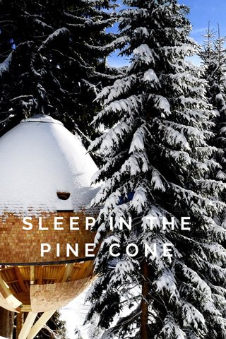 SLEEP IN THE PINE CONE