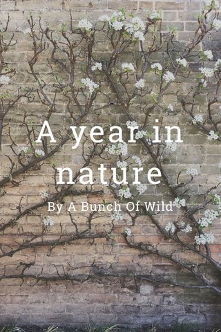 A year in nature By A Bunch Of Wild