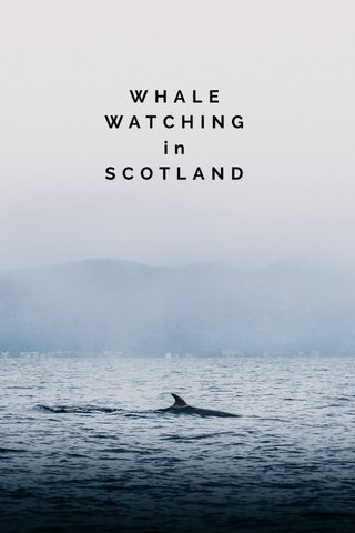 WHALE WATCHING in SCOTLAND