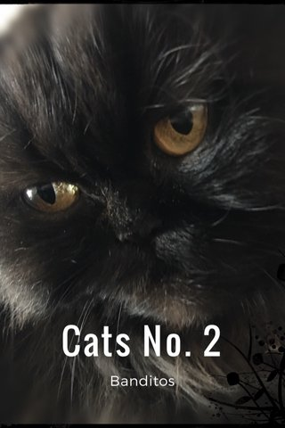 Cats No. 2 Banditos