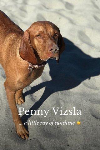 Penny Vizsla ... a little ray of sunshine ☀️