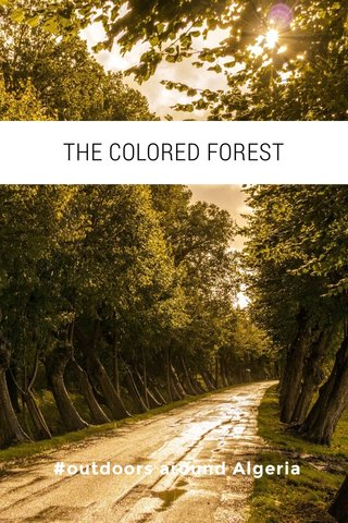THE COLORED FOREST #outdoors around Algeria