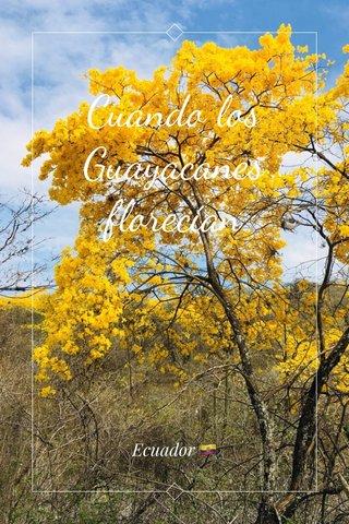 Cuando los Guayacanes florecían Ecuador 🇪🇨