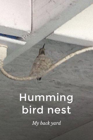 Humming bird nest My back yard