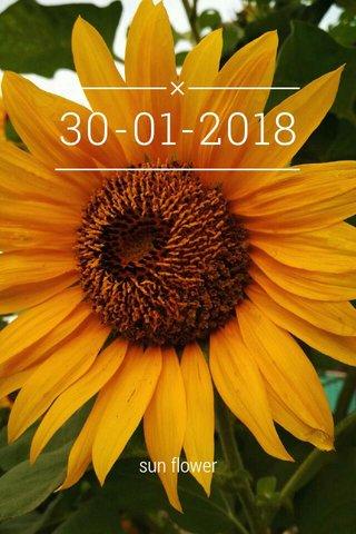 30-01-2018 sun flower
