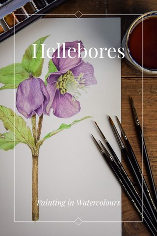 Hellebores Painting in Watercolours