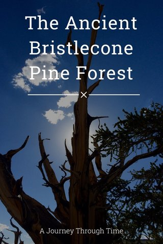 The Ancient Bristlecone Pine Forest A Journey Through Time