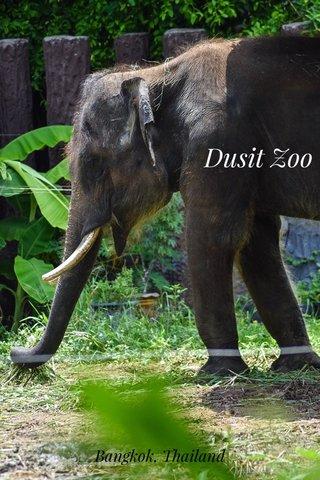 Dusit Zoo Bangkok, Thailand
