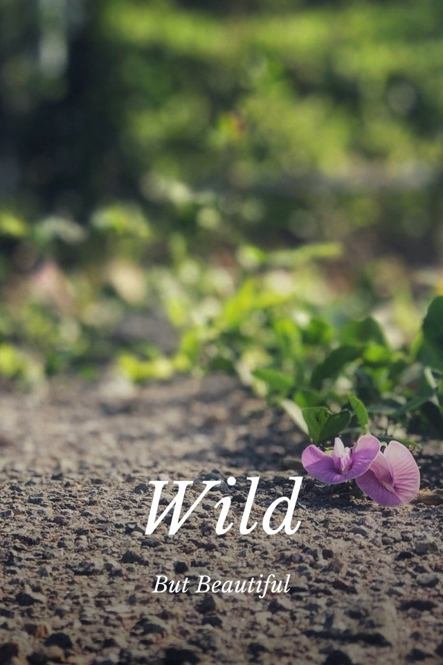 wild things 1488
