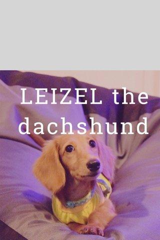 LEIZEL the dachshund