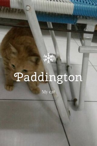 Paddington My cat