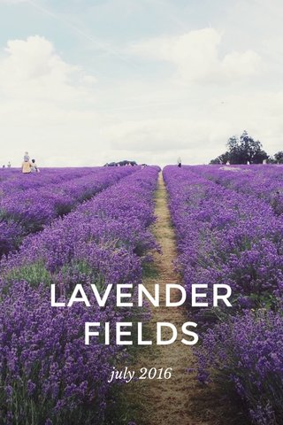 LAVENDER FIELDS july 2016