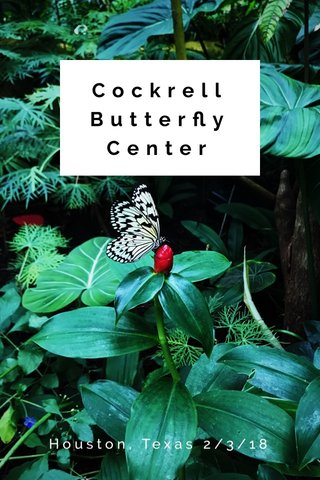 Cockrell Butterfly Center Houston, Texas 2/3/18