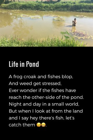 Life in Pond