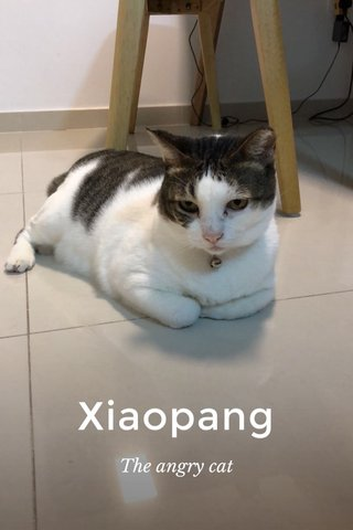 Xiaopang The angry cat