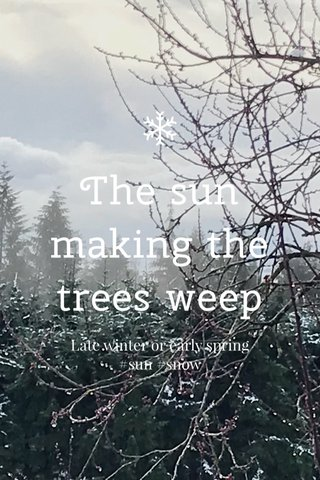 The sun making the trees weep Late winter or early spring #sun #snow