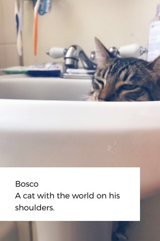Bosco A cat with the world on his shoulders.