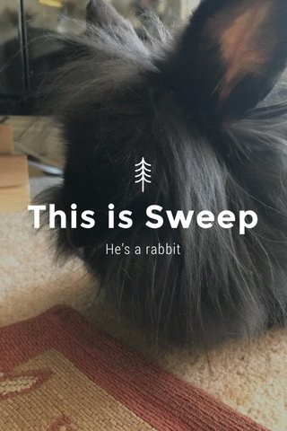 This is Sweep He's a rabbit