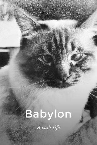 Babylon A cat's life
