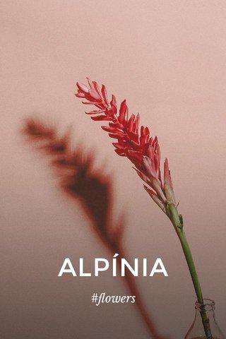 ALPÍNIA #flowers