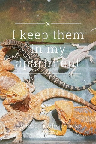 I keep them in my apartment Bearded Dragon, Tegu, Panana, Toothless