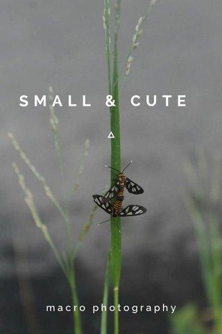 SMALL & CUTE macro photography