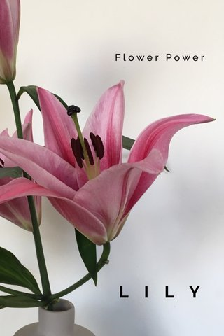 LILY Flower Power