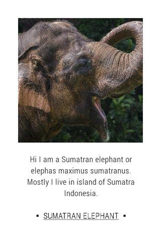 Hi I am a Sumatran elephant or elephas maximus sumatranus. Mostly I live in island of Sumatra Indonesia. ▪ SUMATRAN ELEPHANT ▪
