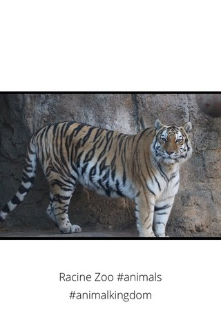 Racine Zoo #animals #animalkingdom