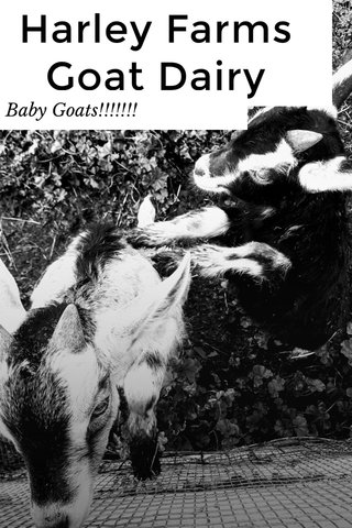 Harley Farms Goat Dairy Baby Goats!!!!!!!