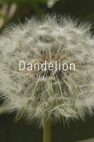 Dandelion like me