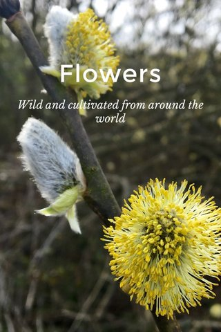 Flowers Wild and cultivated from around the world
