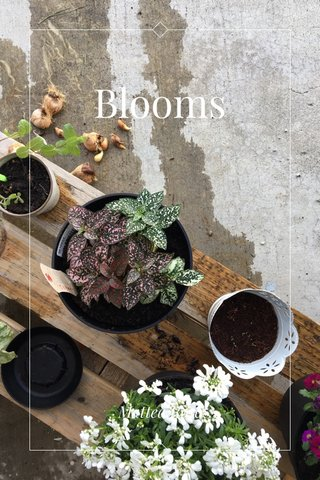 Blooms Mattea Rose
