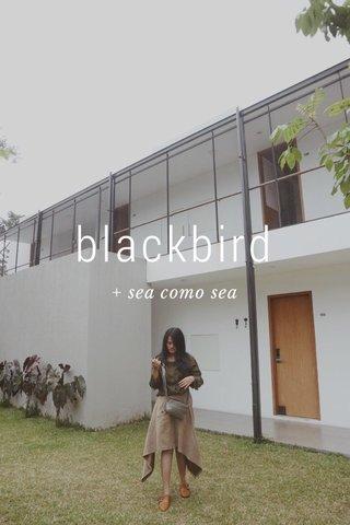 blackbird + sea como sea