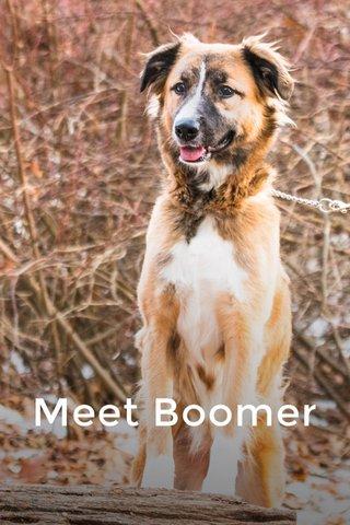 Meet Boomer