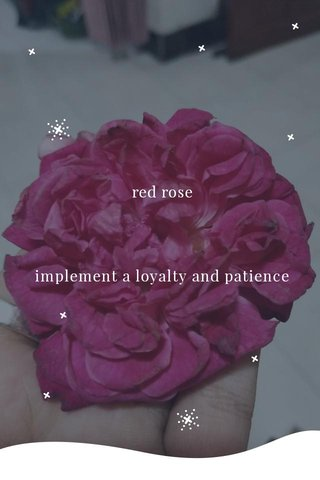 red rose implement a loyalty and patience