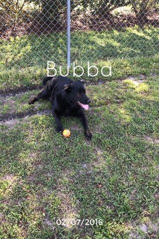 Bubba 02/07/2016
