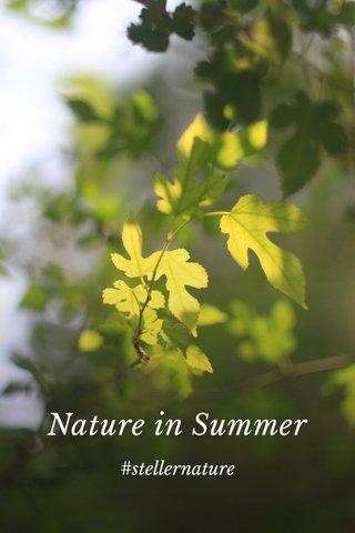 Nature in Summer #stellernature