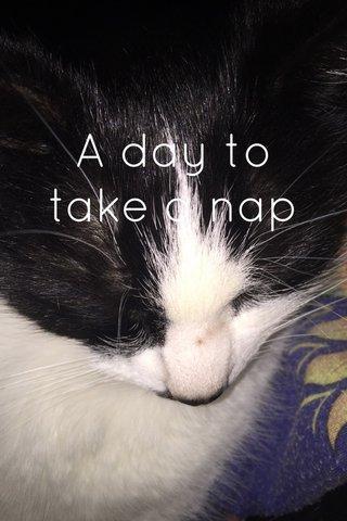 A day to take a nap