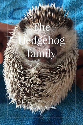 The Hedgehog family Tiny little friends