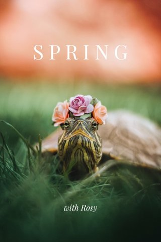 SPRING with Rosy